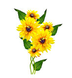 Yellow rudbeckia flower Stock Images
