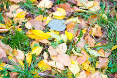Yellow rug of autumn leaves Stock Photos