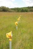 Yellow Runway landing lights in green grass field Royalty Free Stock Photo