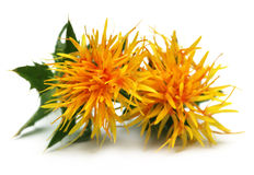 Yellow Safflower Royalty Free Stock Image