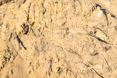 Yellow sand and roots. textura.  royalty free stock image
