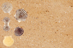 Yellow sand with sea shells background Stock Photos