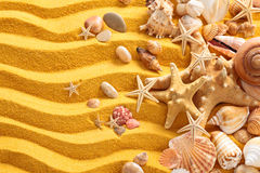 Yellow sand and seashells background. Royalty Free Stock Photography