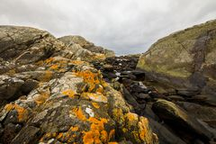 Yellow Lichen On The Rocks Stock Image Image Of Flora