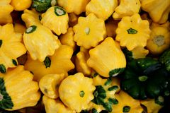 Yellow scallopini squash, Cucurbita pepo Royalty Free Stock Images