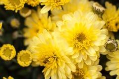 Yellow Sea Imagen de archivo libre de regalías