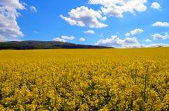 Yellow Sea imagens de stock