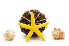 Yellow sea star with shell Royalty Free Stock Photos