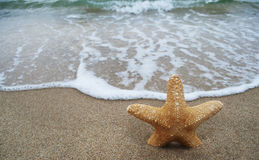 Yellow sea star and wave Stock Image