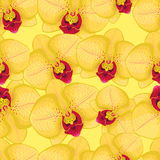 Yellow seamless background with yellow orchids Royalty Free Stock Photography