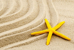 Yellow seastar. Royalty Free Stock Images