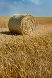 Yellow sheaf of hay on the field and blue sky royalty free stock image