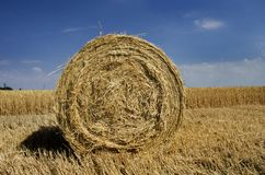 Yellow sheaf of hay on the field and blue sky stock images