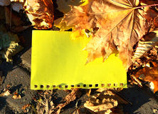 Yellow sheet of notebook for your text among the yellow maple leaves Stock Images