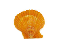 Yellow shell Royalty Free Stock Photos