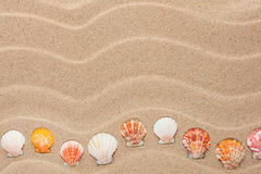 Yellow shell lie on the sand Royalty Free Stock Photography
