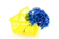 Yellow shopping basket with blue hortensia. Isolated on white background Stock Photography