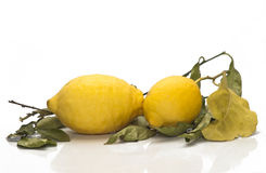 Yellow sicilian fresh lemons Royalty Free Stock Image