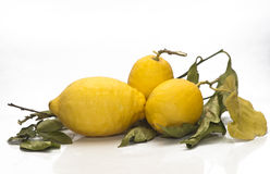Yellow sicilian fresh lemons Stock Photos