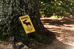 Yellow sign Do not feed the moose ontario canada algonquin national park. Yellow sign Do not feed the moose in ontario canada algonquin national park Stock Images