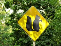Yellow sign showing habitats of squirrels Royalty Free Stock Images