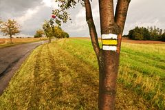 Yellow signposting. The yellow markings on the trunk rowan stock images