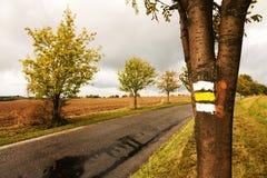 Yellow signposting. The yellow markings on the trunk rowan stock photo