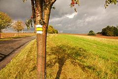 Yellow signposting. The yellow markings on the trunk rowan stock photos