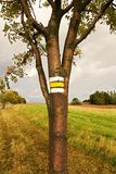Yellow signposting. The yellow markings on the trunk rowan royalty free stock photography