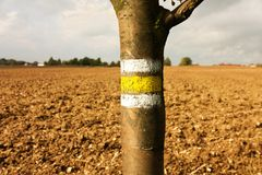 Yellow signposting. The yellow markings on the trunk rowan royalty free stock photo