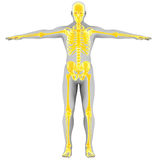 Yellow skeleton Royalty Free Stock Image