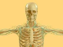 Yellow skeleton on fun yellow studio background. Graphic,design,modern. Royalty Free Stock Photography