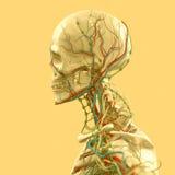 Yellow skeleton on fun yellow studio background. Graphic,design,modern. Royalty Free Stock Image