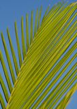 Yellow, Sky, Leaf, Palm Tree Royalty Free Stock Photo
