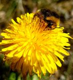 Yellow. Small creatures in nature Royalty Free Stock Images