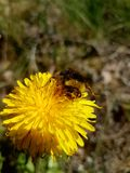 Yellow. Small creatures in nature Stock Photography