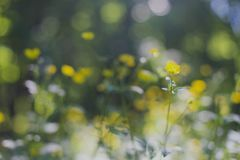 Abstract background green tree bokeh. Yellow small flower on soft blurred background Stock Images