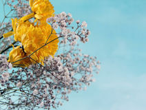Yellow small flowers blue background. Small Flower Concept and Decoration Royalty Free Stock Photography