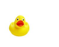 Yellow small rubber duck isolated on white. Yellow small cute rubber duck isolated on white. Frontal view Stock Image