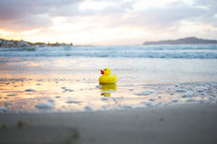 Yellow small toy duckling on beach Royalty Free Stock Photo