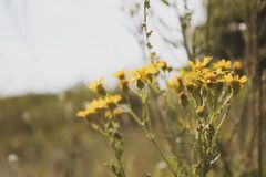 Yellow small wild flowers. Side view. There is a place for text. stock photo
