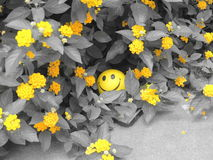 Yellow smile. A yellowey smiley radiating its colour in its surrounding Stock Photo