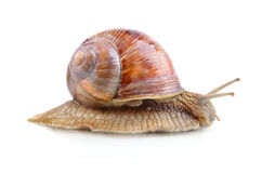 Yellow snail Stock Photos