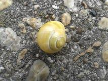 Yellow snail on the stone Royalty Free Stock Photo