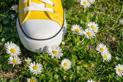 Yellow sneaker in dasiy field. Yellow sneakers i a dasiy field royalty free stock photos