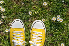 Yellow sneakers in a dasiy field. First person view royalty free stock image