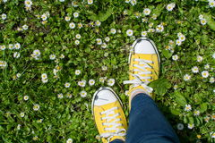 Yellow sneakers in a dasiy field. First person view. Yellow sneakers in a dasiy field. First person point of view stock photo