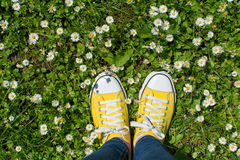 Yellow sneakers in a dasiy field. First person view. Yellow sneakers in a dasiy field. First person point of view royalty free stock images