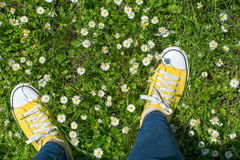 Yellow sneakers in a dasiy field. First person view. Yellow sneakers in a dasiy field. First person point of view royalty free stock image