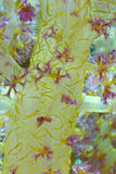 Yellow Soft coral. Part of branch of soft coral - close up photo Stock Photo